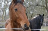 PferdeGut_slider (78kb)